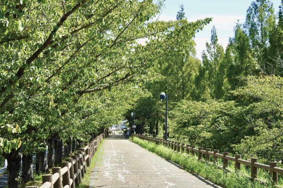 街路樹の風景写真