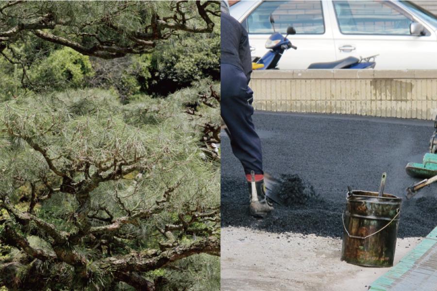 松の木とアスファルト舗装している作業風景写真